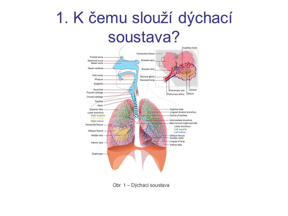1. K čemu slouží dýchací soustava? Obr. 1 – Dýchací soustava
