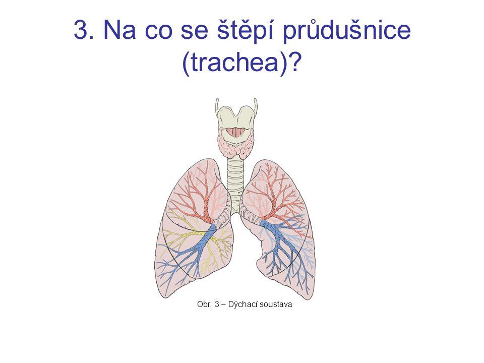3. Na co se štěpí průdušnice (trachea)? Obr. 3 – Dýchací soustava