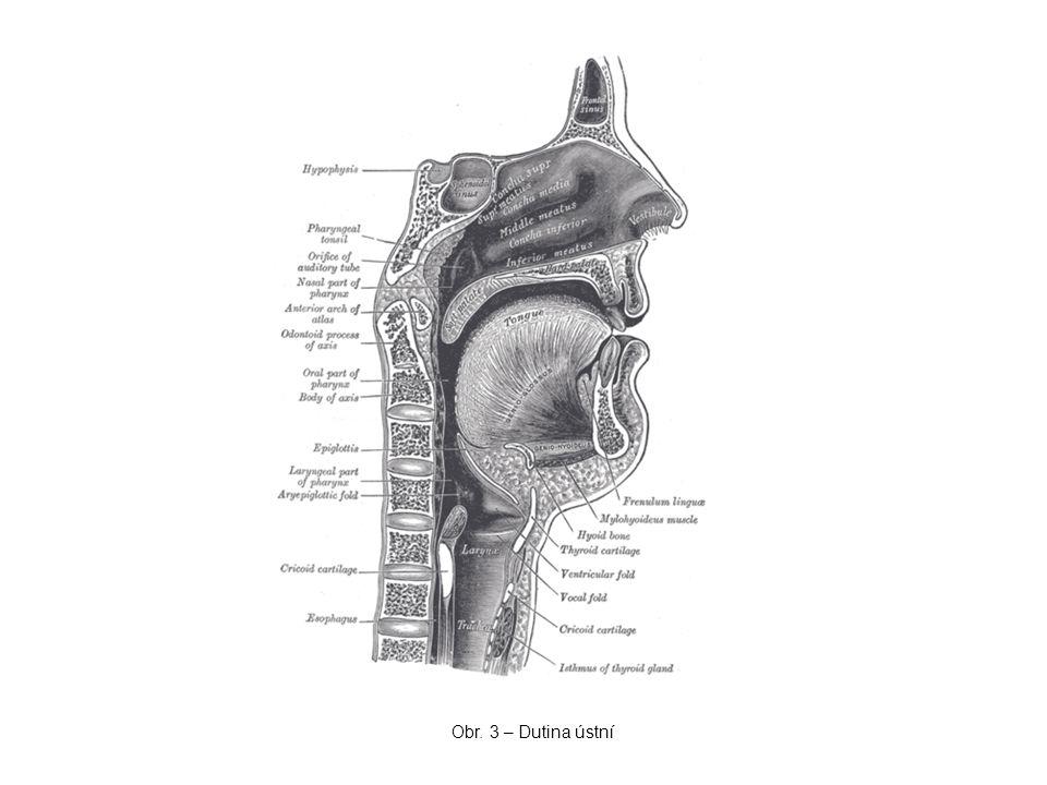 Obr. 3 – Dutina ústní
