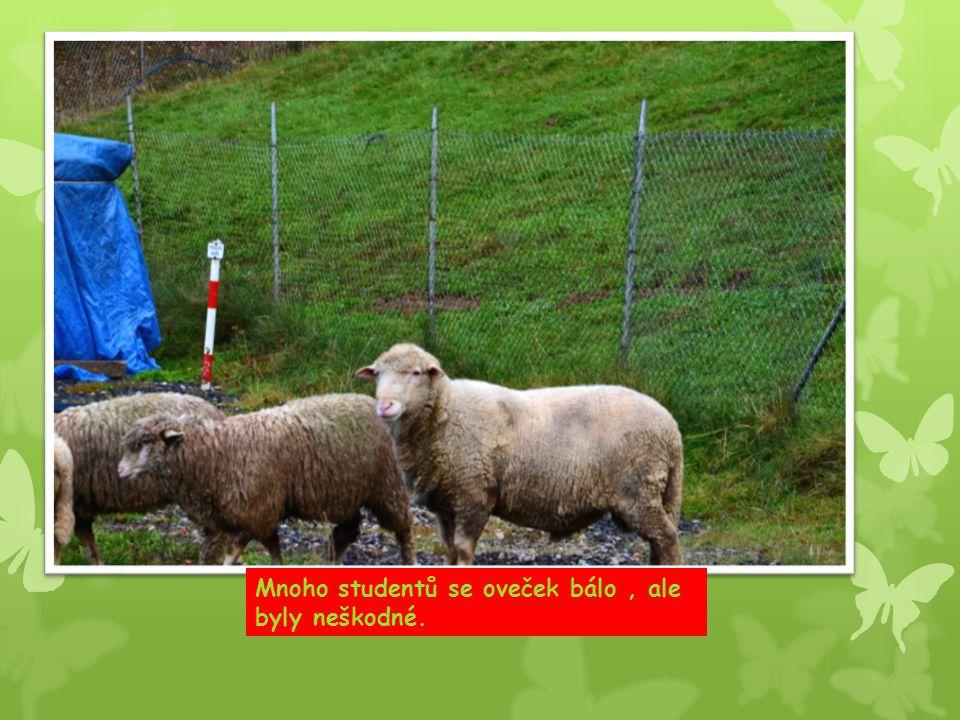 Mnoho studentů se oveček bálo, ale byly neškodné.
