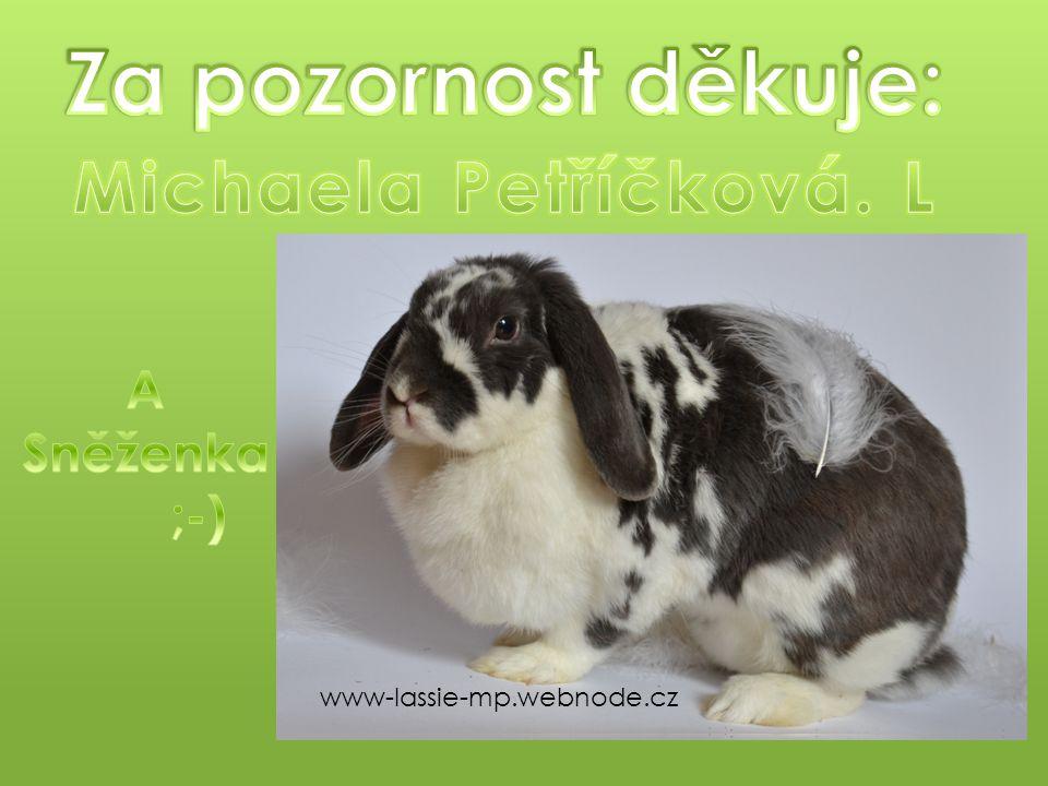 www-lassie-mp.webnode.cz