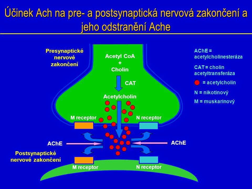 Acetyl CoA + Cholin Acetylcholin N receptor Účinek Ach na pre- a postsynaptická nervová zakončení a jeho odstranění Ache Presynaptické nervové zakonče