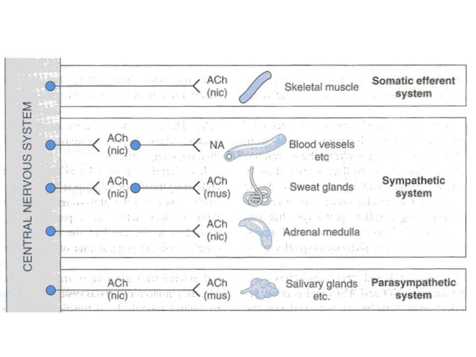 Cholinomimetika 1.přímá působící na M receptorech - estery cholinu, alkaloidy N receptorech 2.