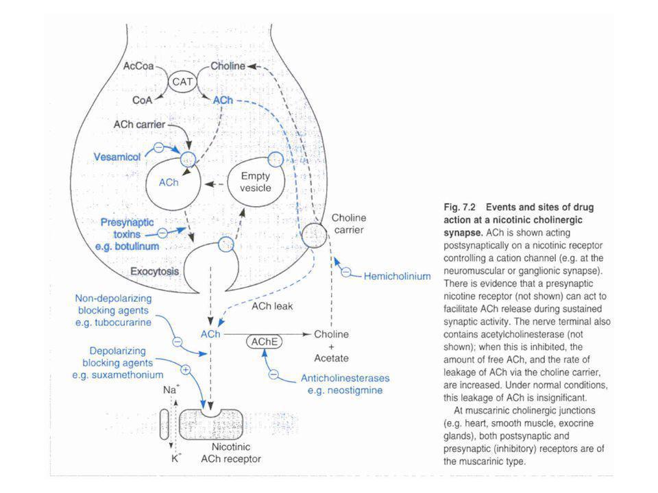 Drugs affecting autonomic ganglia Ganglion stimulants –(acetylcholine) –Nicotine (drug of abuse) –Lobeline (found in tabacco leaves as well) –Dimethylphenylpiperazinium (DMPP) –Tetramethylamonium Used as experimental tools