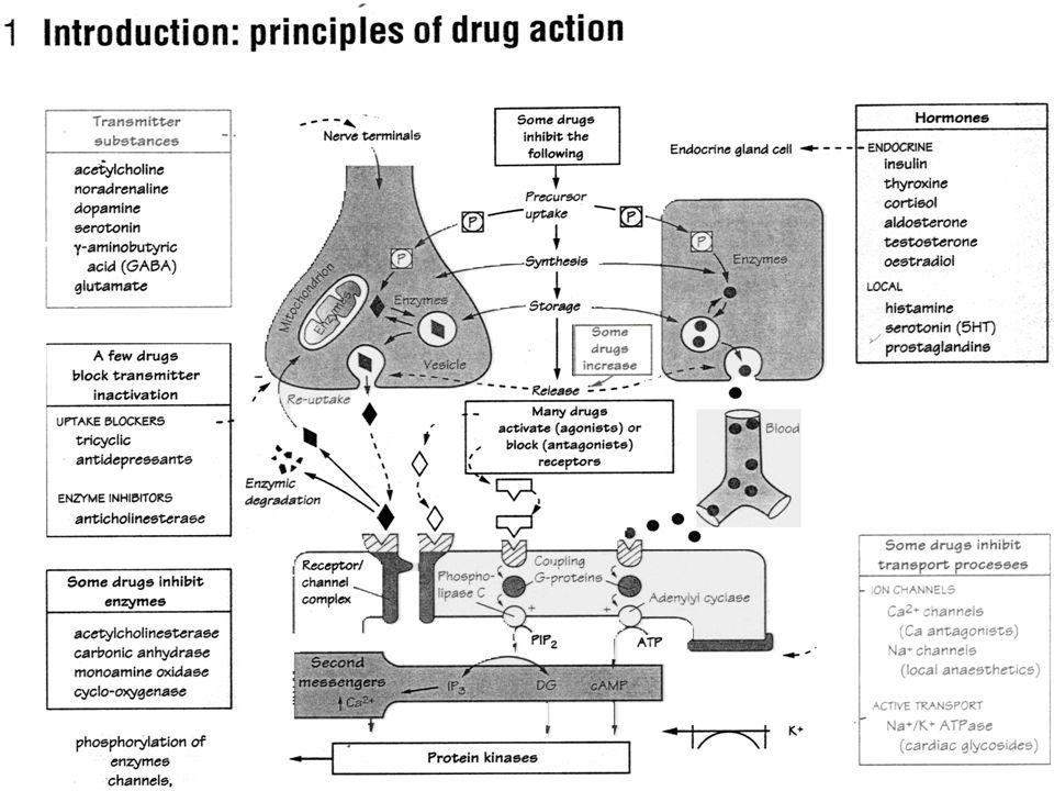 1.Nespecifický účinek-příklady2: Látky srážející bílkoviny - adstringencia.