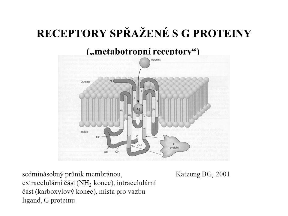 """Remedia 1998 RECEPTORY NA IONTOVÝCH KANÁLECH (""""ionotropní receptory ) GABA A receptor - pentamerní struktura - receptor pro GABA, pro modulující látky (např."""
