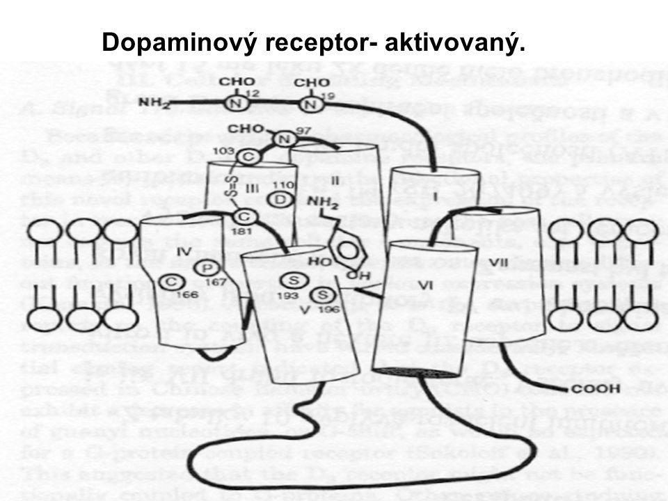 Dopaminový receptor