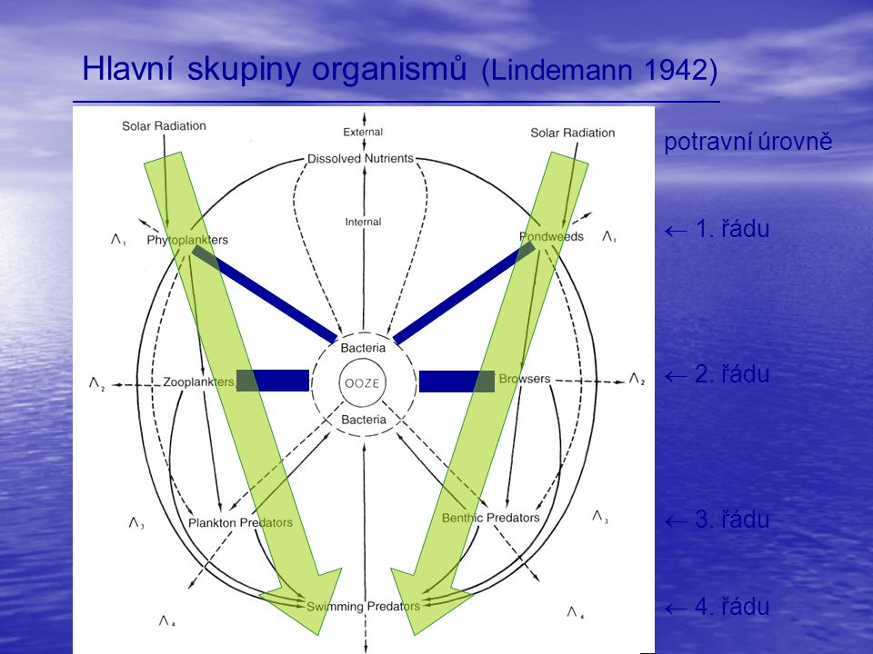 Hlavní skupiny organismů (Lindemann 1942) potravní úrovně  1. řádu  2. řádu  3. řádu  4. řádu