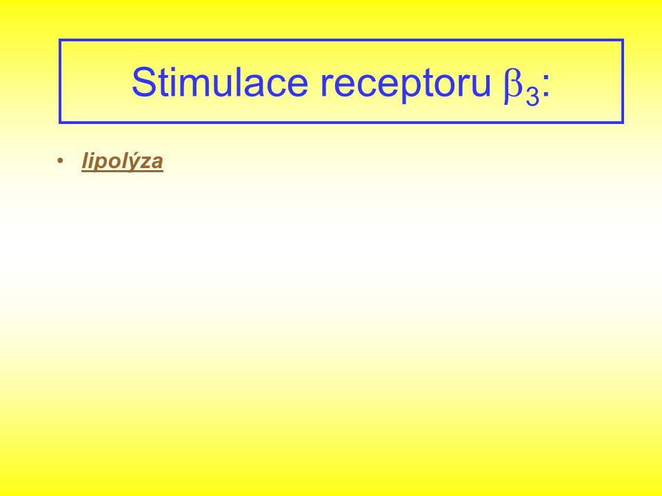 lipolýza Stimulace receptoru  3 :
