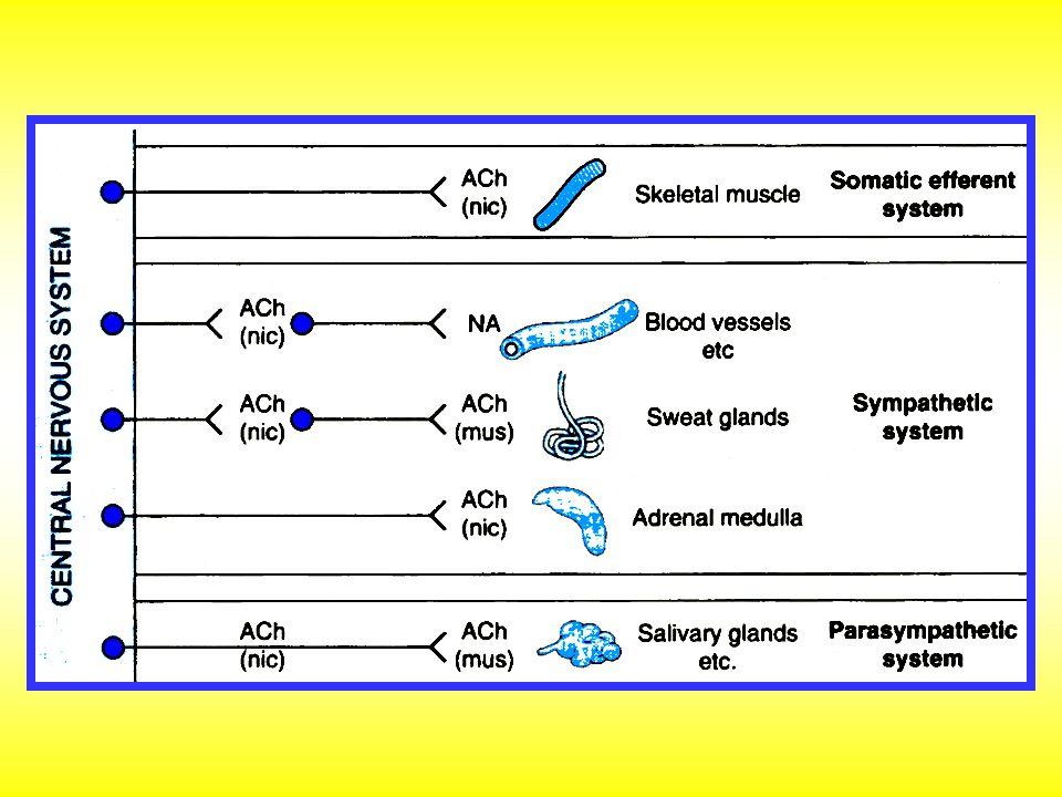  sympatolytika: kompetitivní antagonisté (nulová vnitřní aktivita) nebo parciální agonisté (ISA, intrinsic sympathomimetic activity) - dualisté beta mimetik Selektivita: neselektivní nebo kardioselektivní (prim.