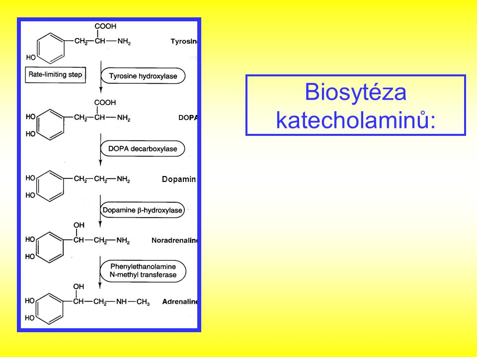  -agonisté: neselektivní - dopamin  2 agonisté - fenoterol, salbutamol, terbutalin, formoterol zachován bronchodilatační a tokolytický účinek při minimu kardiovaskulárních účinků dále inhibice uvolňování leukotrienů, histaminu a inhibice fosfolipázy A 2