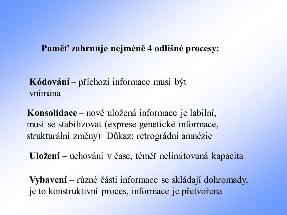 Paměť zahrnuje nejméně 4 odlišné procesy: Kódování – příchozí informace musí být vnímána Konsolidace – nově uložená informace je labilní, musí se stabilizovat (exprese genetické informace, strukturální změny) Důkaz: retrográdní amnézie Uložení – uchování v čase, téměř nelimitovaná kapacita Vybavení – různé části informace se skládají dohromady, je to konstruktivní proces, informace je přetvořena