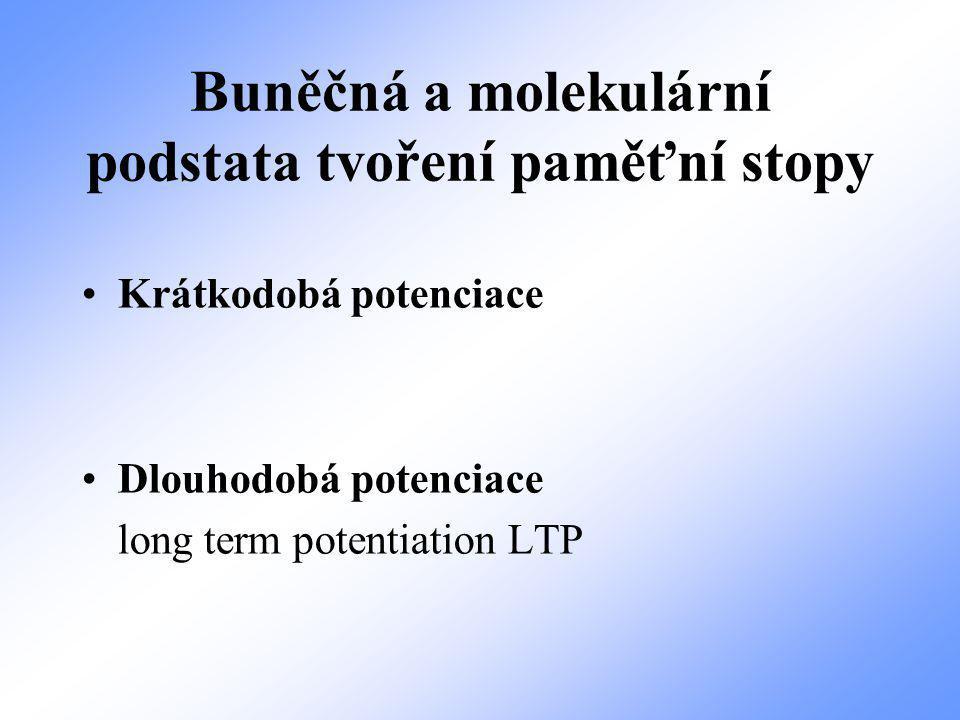 Buněčná a molekulární podstata tvoření paměťní stopy Krátkodobá potenciace Dlouhodobá potenciace long term potentiation LTP