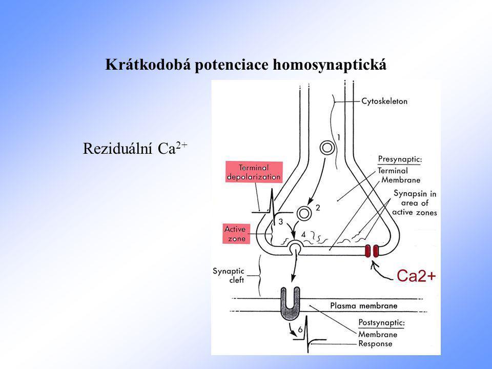 Krátkodobá potenciace homosynaptická Reziduální Ca 2+