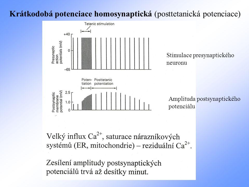 Stimulace presynaptického neuronu Amplituda postsynaptického potenciálu Krátkodobá potenciace homosynaptická (posttetanická potenciace)