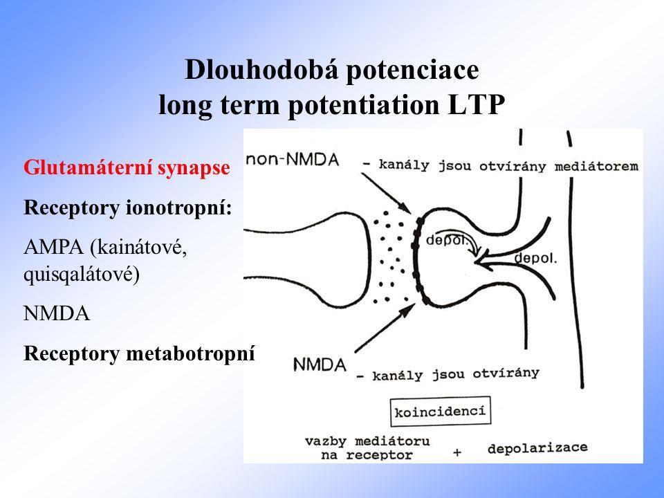 Dlouhodobá potenciace long term potentiation LTP Glutamáterní synapse Receptory ionotropní: AMPA (kainátové, quisqalátové) NMDA Receptory metabotropní