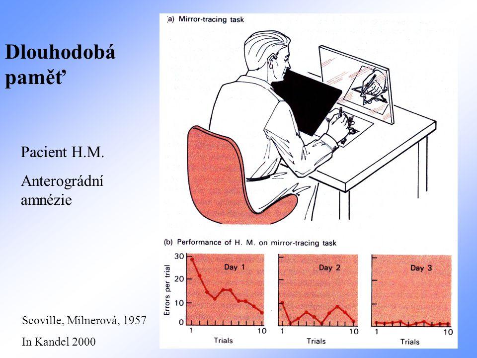 Pacient H.M. Anterográdní amnézie Dlouhodobá paměť Scoville, Milnerová, 1957 In Kandel 2000