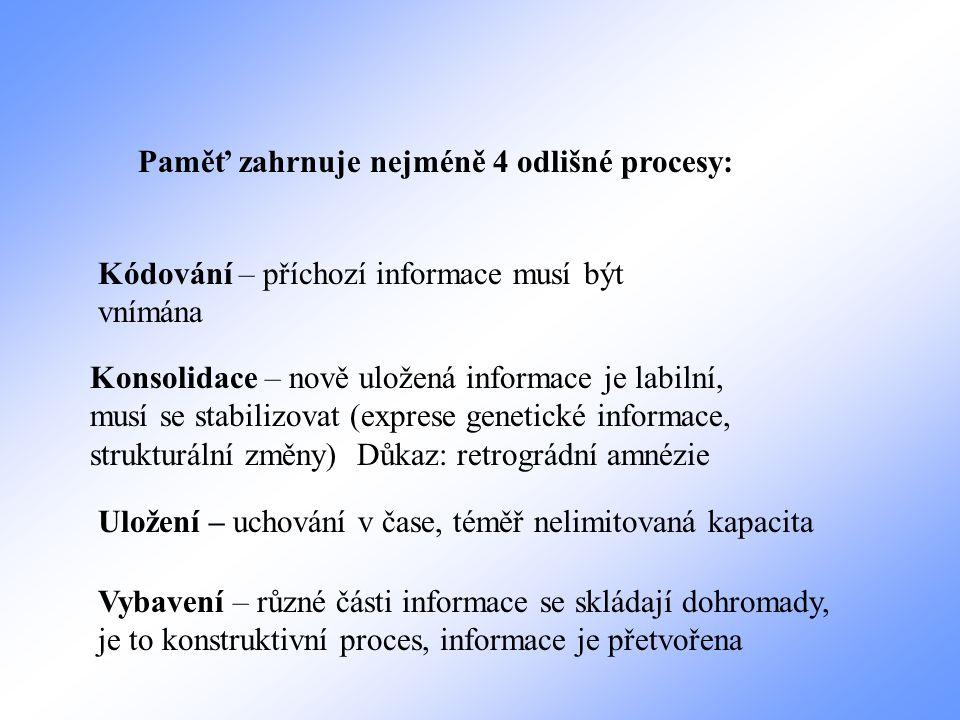 Paměť zahrnuje nejméně 4 odlišné procesy: Kódování – příchozí informace musí být vnímána Konsolidace – nově uložená informace je labilní, musí se stab