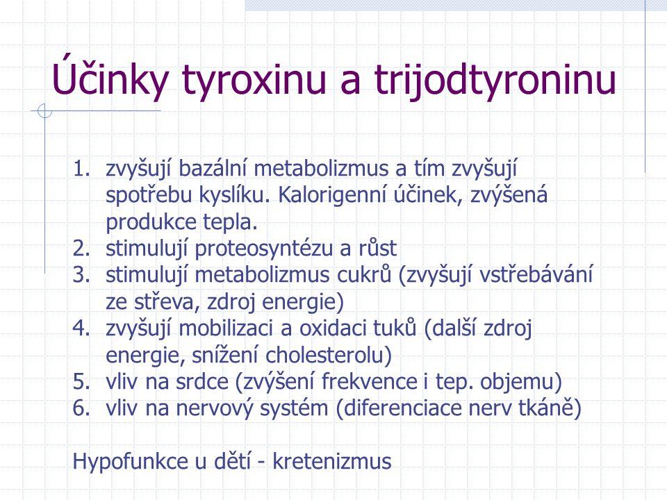 Účinky tyroxinu a trijodtyroninu 1.zvyšují bazální metabolizmus a tím zvyšují spotřebu kyslíku. Kalorigenní účinek, zvýšená produkce tepla. 2.stimuluj