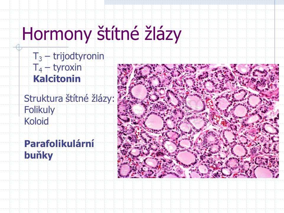 Hormony štítné žlázy T 3 – trijodtyronin T 4 – tyroxin Kalcitonin Struktura štítné žlázy: Folikuly Koloid Parafolikulární buňky