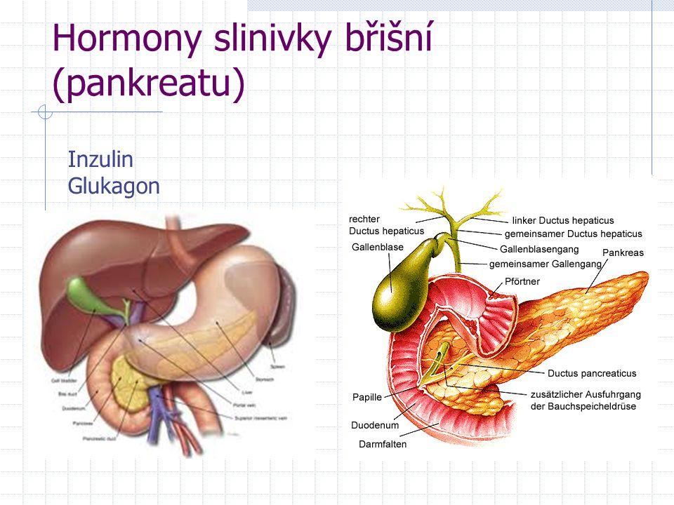 Hormony slinivky břišní (pankreatu) Inzulin Glukagon