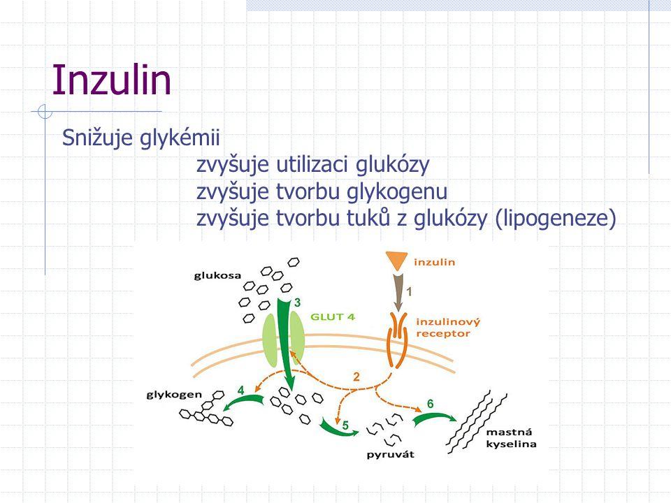 Inzulin Snižuje glykémii zvyšuje utilizaci glukózy zvyšuje tvorbu glykogenu zvyšuje tvorbu tuků z glukózy (lipogeneze)