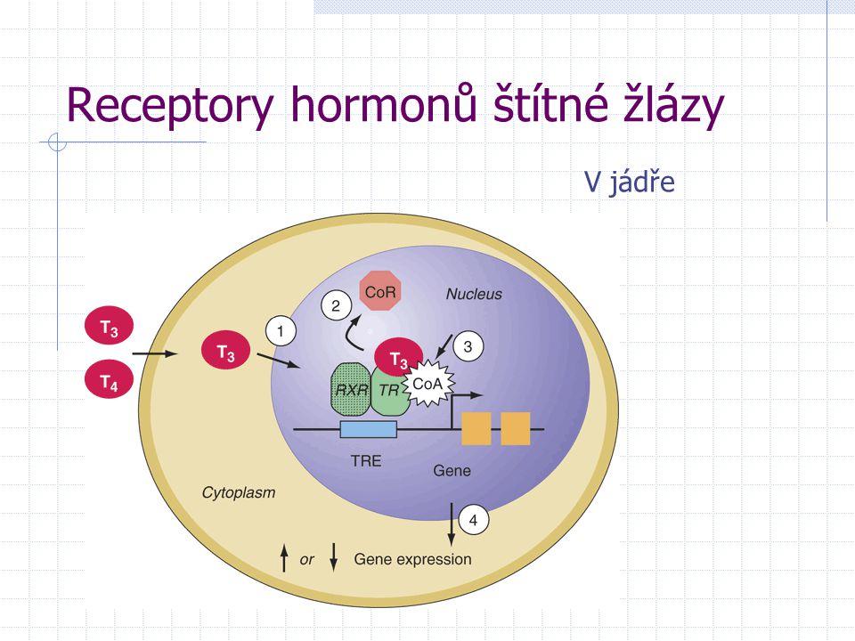 Receptory hormonů štítné žlázy V jádře