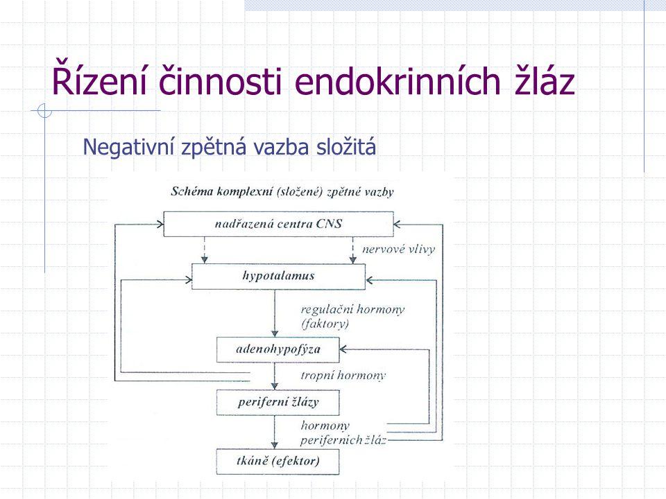 Řízení činnosti endokrinních žláz Negativní zpětná vazba složitá