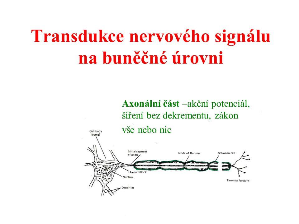 Transdukce nervového signálu na buněčné úrovni Axonální část –akční potenciál, šíření bez dekrementu, zákon vše nebo nic