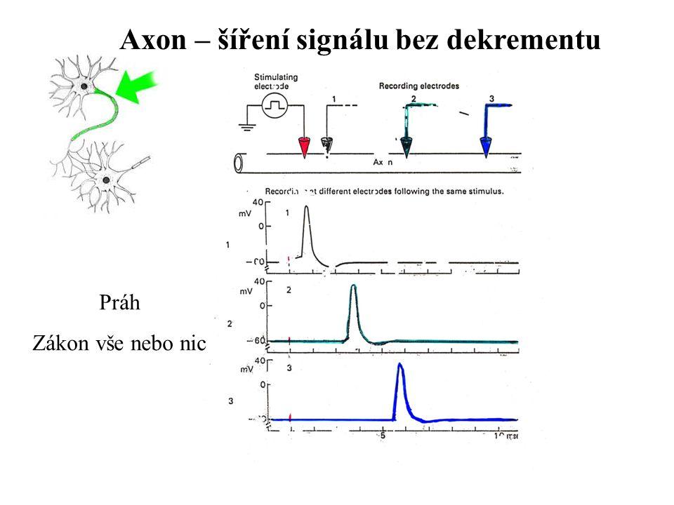 Axon – šíření signálu bez dekrementu Práh Zákon vše nebo nic