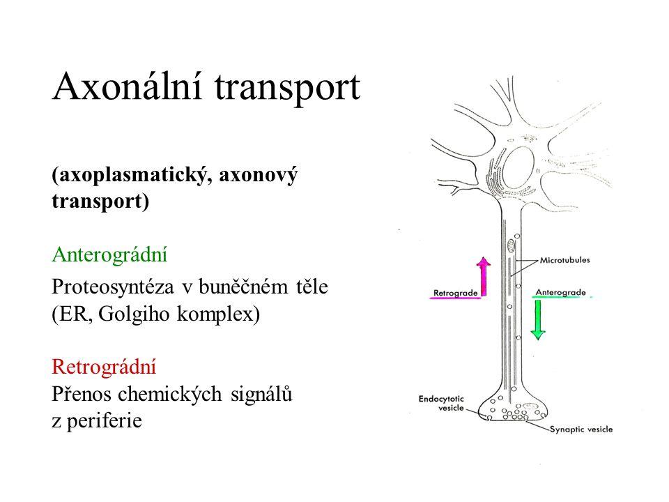 Poškození axonu v PNS Komprese, rozdrcení, přetětí – degenerace distální části (walleriánská degenerace, odstranění makrofágy) Zůstávají Schwannovy buňky a bazální lamina (Büngnerův proužek) Proximální pahýl dorůstá (axonal sprouting) Prognosis quo ad functionem Komprese, rozdrcení – dobrá, nalezení správného cíle na periferii Přetětí – horší, regenerace méně pravděpodobná