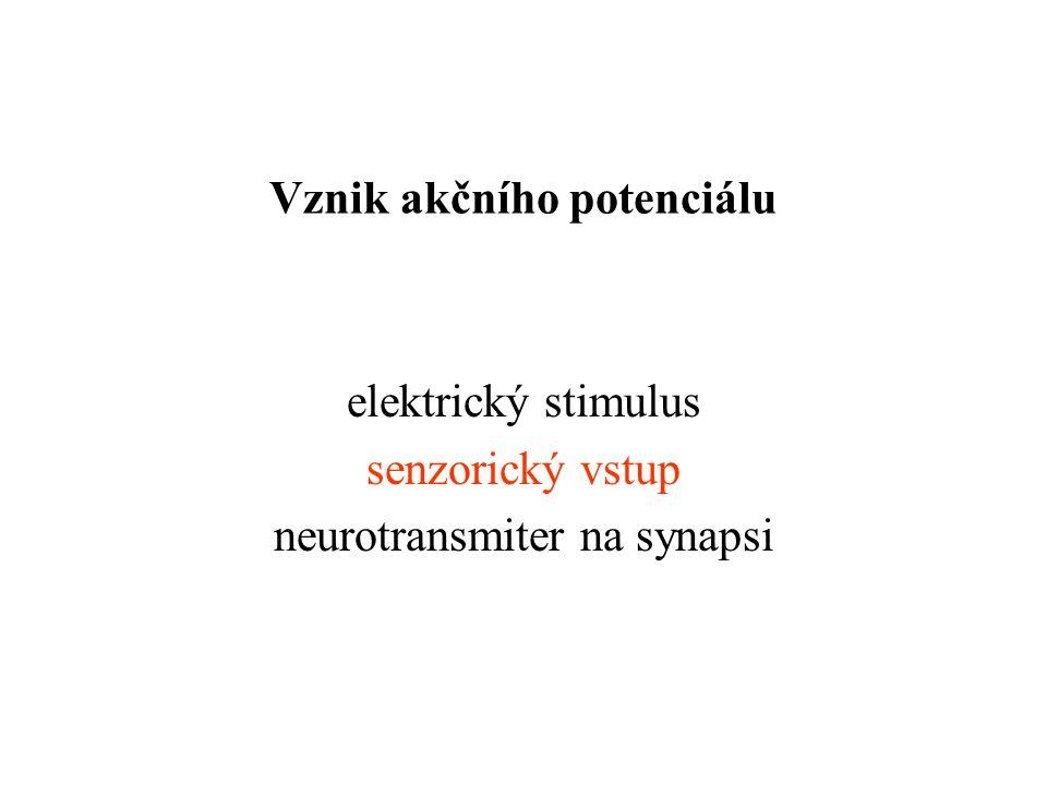 Vznik akčního potenciálu elektrický stimulus senzorický vstup neurotransmiter na synapsi