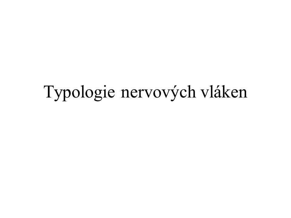 Typologie nervových vláken