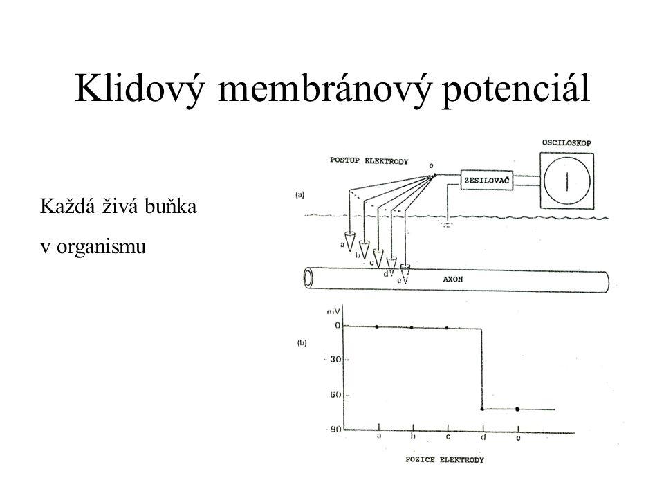 Senzorický vstup Senzorická transdukce – konverze stimulu z vnějšího nebo vnitřního prostředí na elektrický signál Signály: zvukové vlny (sluch), chuť, foton (zrak), dotek, bolest, čich, svalové vřeténko FototransdukceChemotransdukceMechanotransdukce