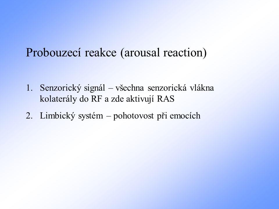 Probouzecí reakce (arousal reaction) 1.Senzorický signál – všechna senzorická vlákna kolaterály do RF a zde aktivují RAS 2.Limbický systém – pohotovos