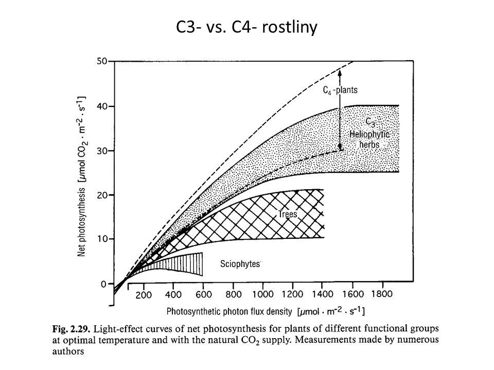 C3- vs. C4- rostliny