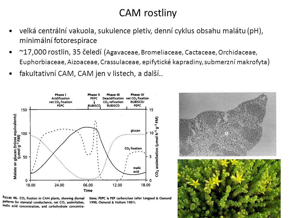 CAM rostliny velká centrální vakuola, sukulence pletiv, denní cyklus obsahu malátu (pH), minimální fotorespirace ~17,000 rostlin, 35 čeledí ( Agavacea