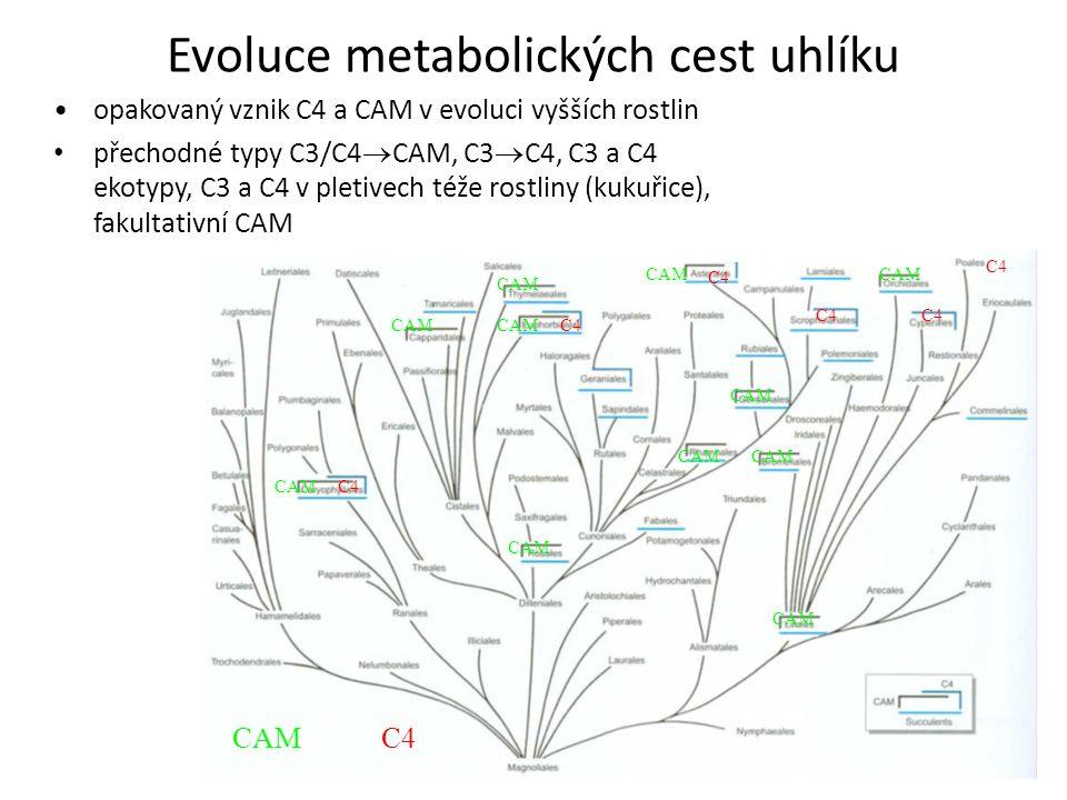 Evoluce metabolických cest uhlíku C4 CAM C4 CAM opakovaný vznik C4 a CAM v evoluci vyšších rostlin přechodné typy C3/C4  CAM, C3  C4, C3 a C4 ekotyp