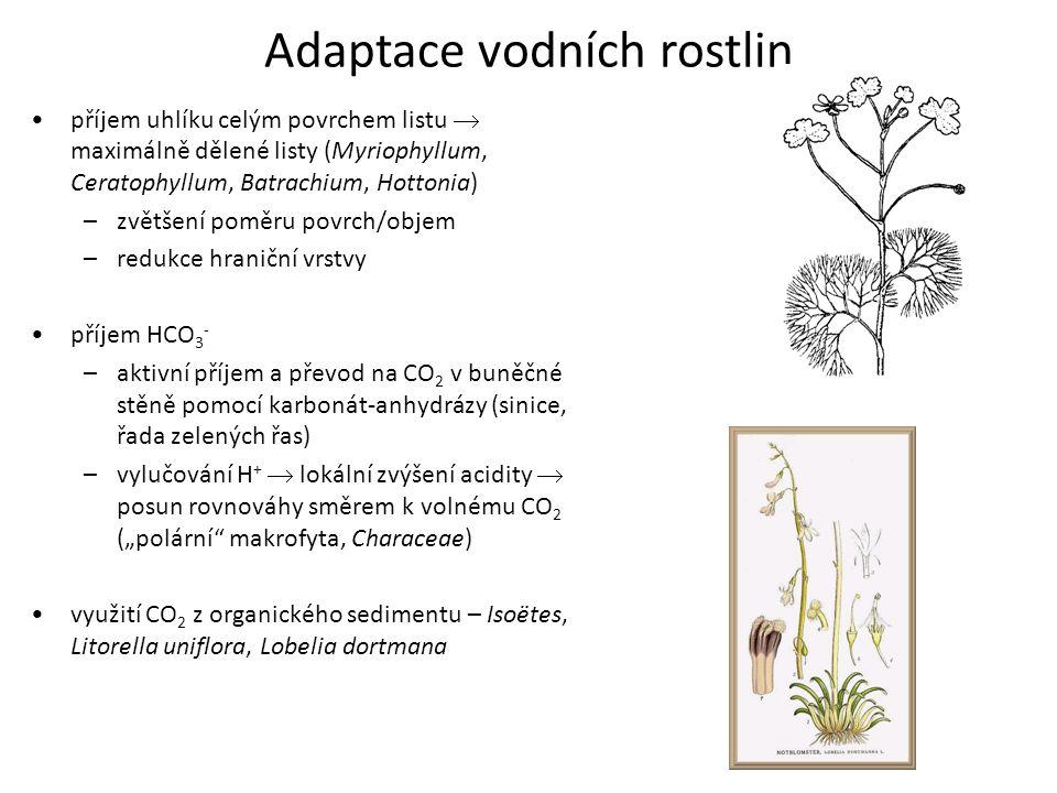 Adaptace vodních rostlin příjem uhlíku celým povrchem listu  maximálně dělené listy (Myriophyllum, Ceratophyllum, Batrachium, Hottonia) –zvětšení pom