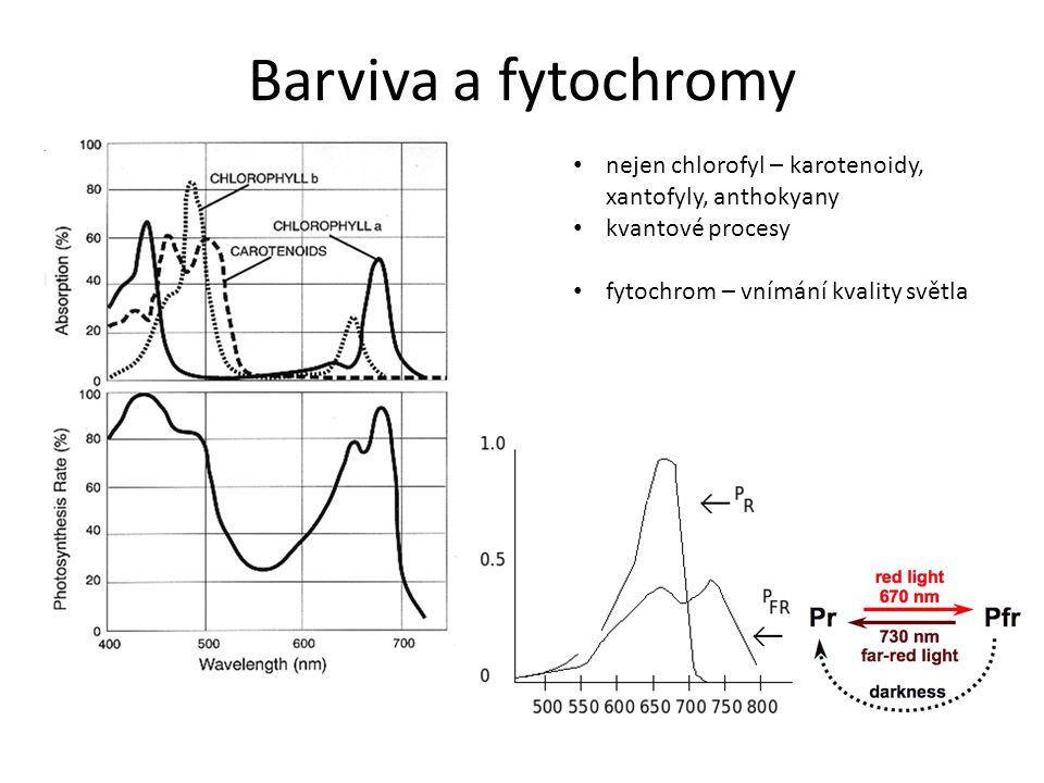 Barviva a fytochromy nejen chlorofyl – karotenoidy, xantofyly, anthokyany kvantové procesy fytochrom – vnímání kvality světla