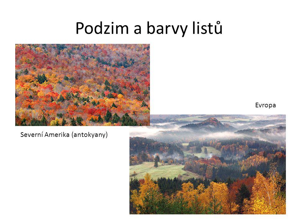 Podzim a barvy listů Severní Amerika (antokyany) Evropa