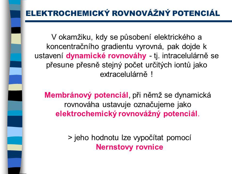 ELEKTROCHEMICKÝ ROVNOVÁŽNÝ POTENCIÁL V okamžiku, kdy se působení elektrického a koncentračního gradientu vyrovná, pak dojde k ustavení dynamické rovno