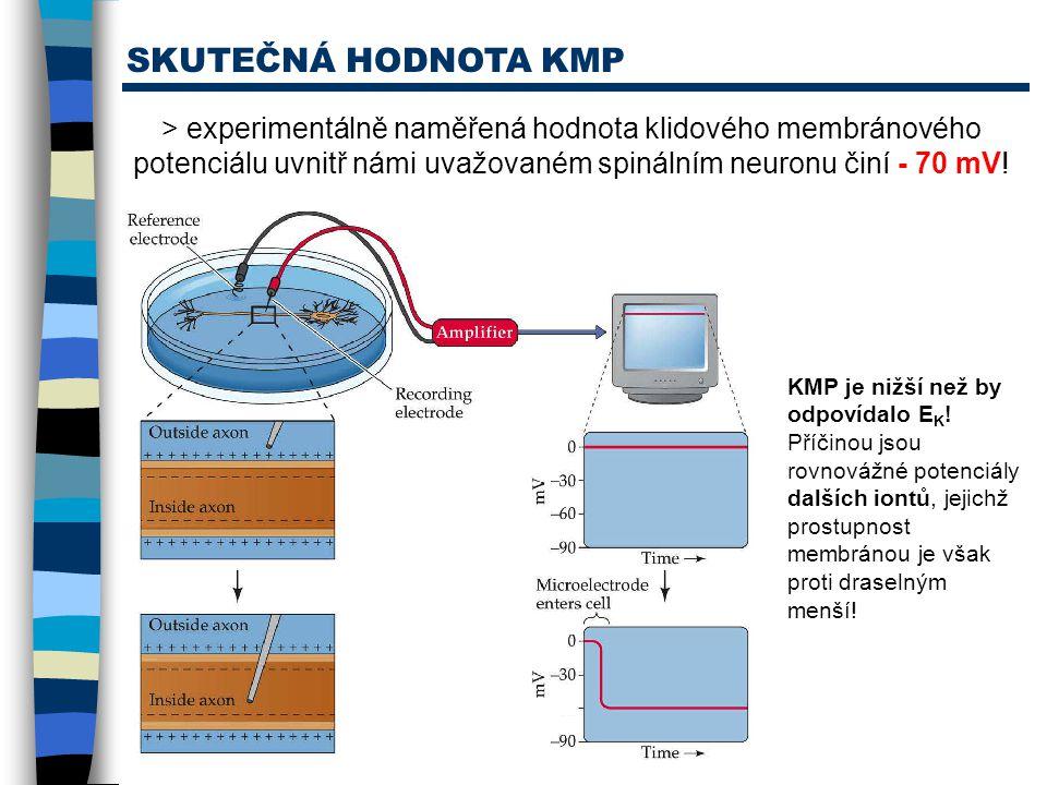 SKUTEČNÁ HODNOTA KMP > experimentálně naměřená hodnota klidového membránového potenciálu uvnitř námi uvažovaném spinálním neuronu činí - 70 mV! KMP je