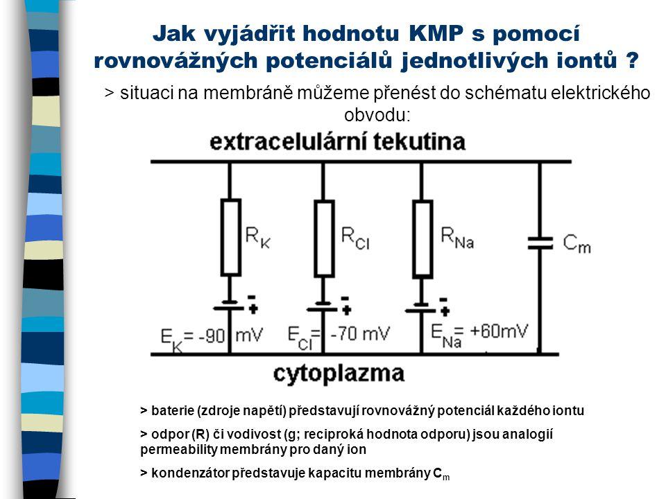 Jak vyjádřit hodnotu KMP s pomocí rovnovážných potenciálů jednotlivých iontů ? > situaci na membráně můžeme přenést do schématu elektrického obvodu: >