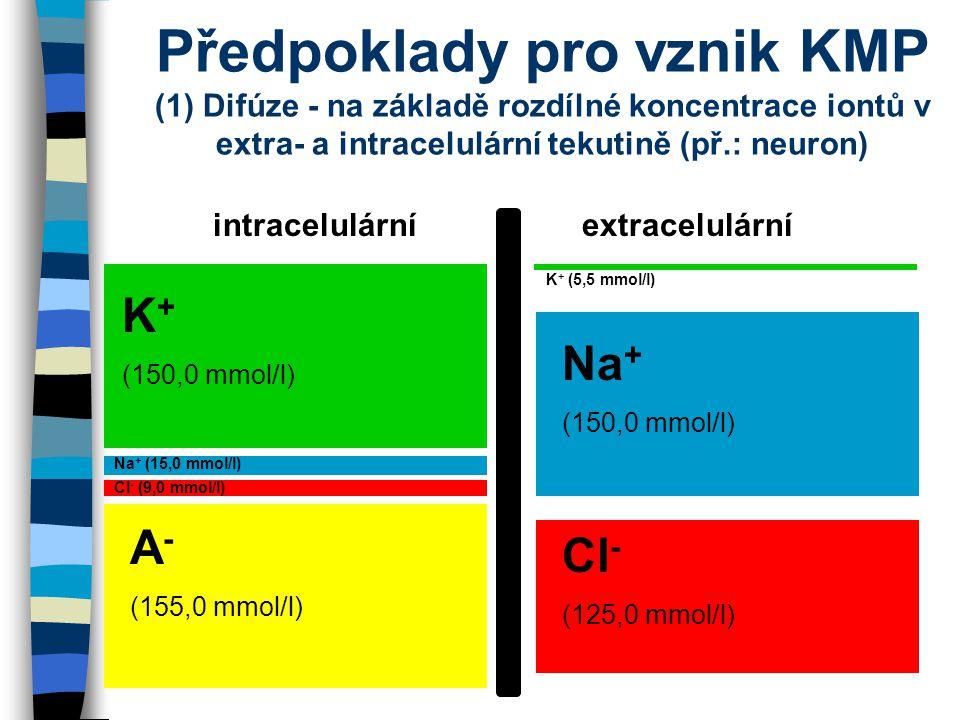 Předpoklady pro vznik KMP (1) Difúze - na základě rozdílné koncentrace iontů v extra- a intracelulární tekutině (př.: neuron) intracelulární extracelu