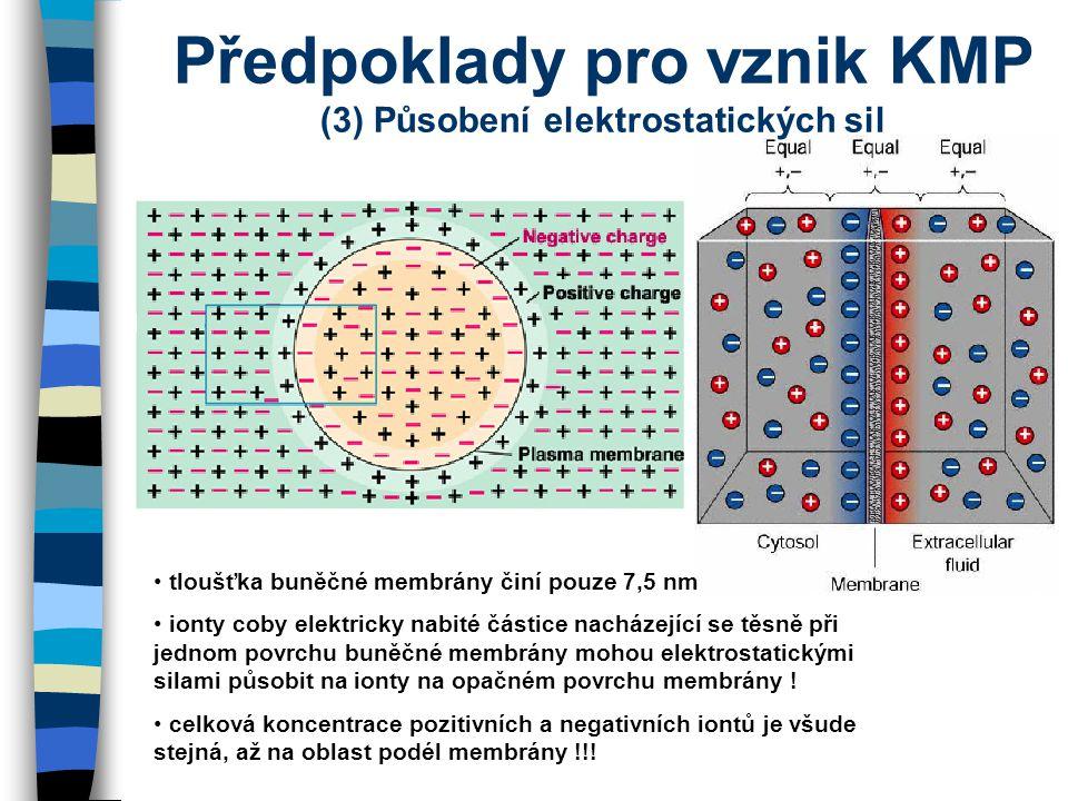 Předpoklady pro vznik KMP (3) Působení elektrostatických sil tloušťka buněčné membrány činí pouze 7,5 nm ionty coby elektricky nabité částice nacházej