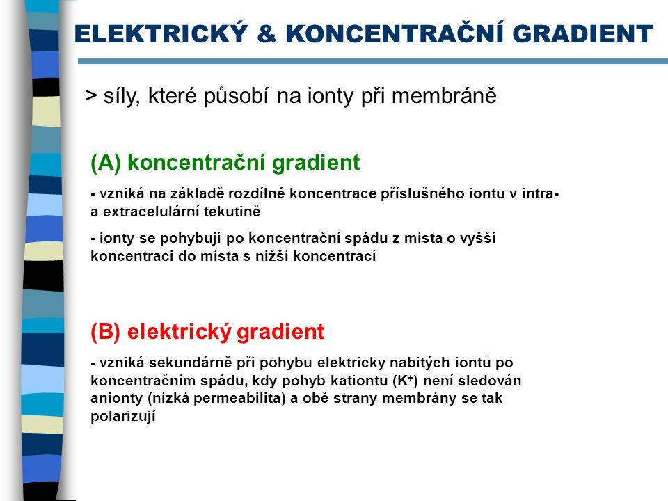 ELEKTRICKÝ & KONCENTRAČNÍ GRADIENT > síly, které působí na ionty při membráně (A) koncentrační gradient - vzniká na základě rozdílné koncentrace přísl