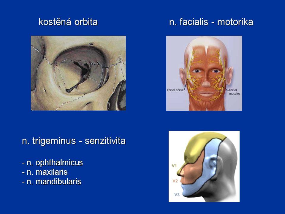 kostěná orbita n.facialis - motorika n. trigeminus - senzitivita - n.