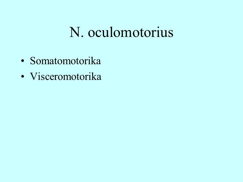 N. oculomotorius Somatomotorika Visceromotorika