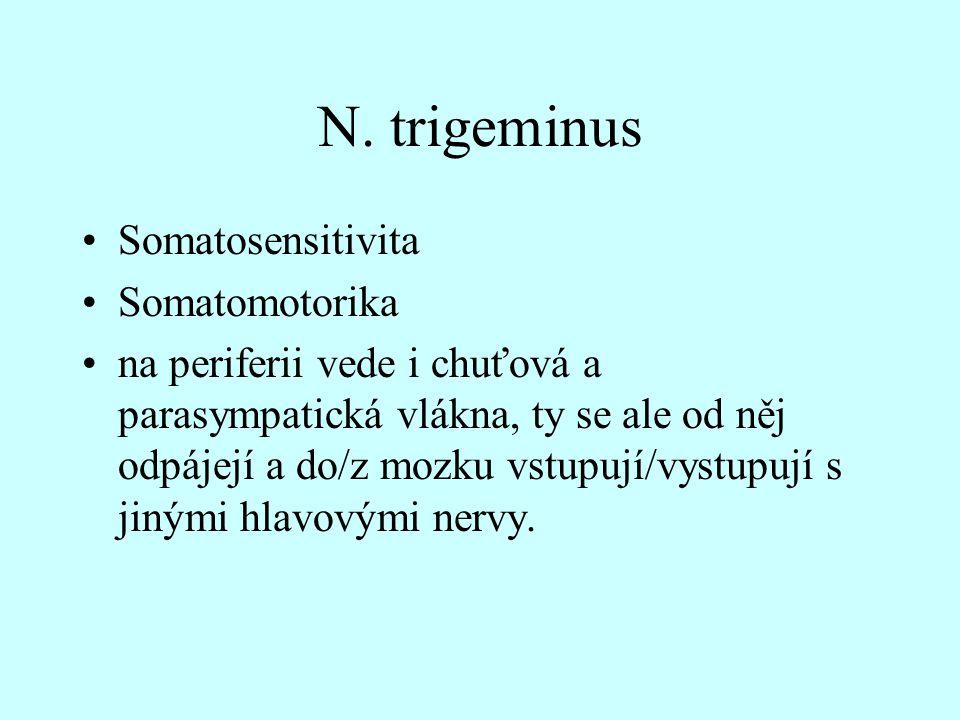 N. trigeminus Somatosensitivita Somatomotorika na periferii vede i chuťová a parasympatická vlákna, ty se ale od něj odpájejí a do/z mozku vstupují/vy